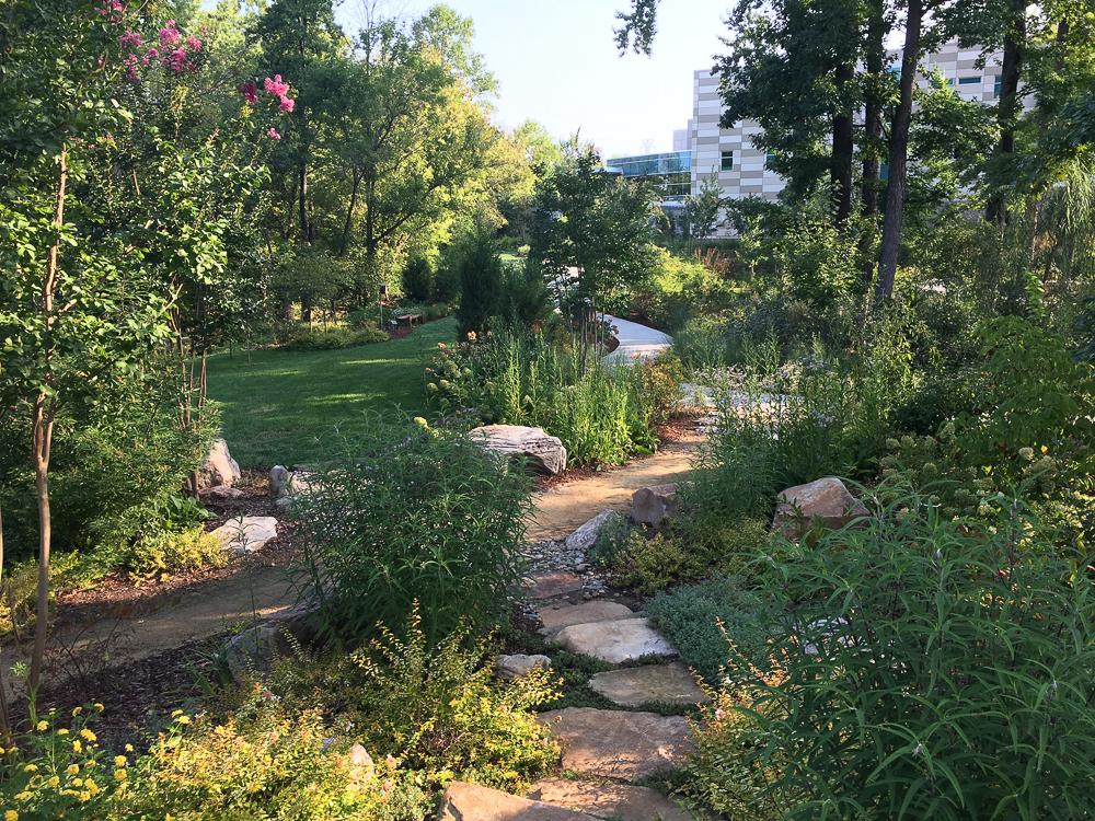 Healing Gardens at Wesley Long Hospital – Studio Pagliai